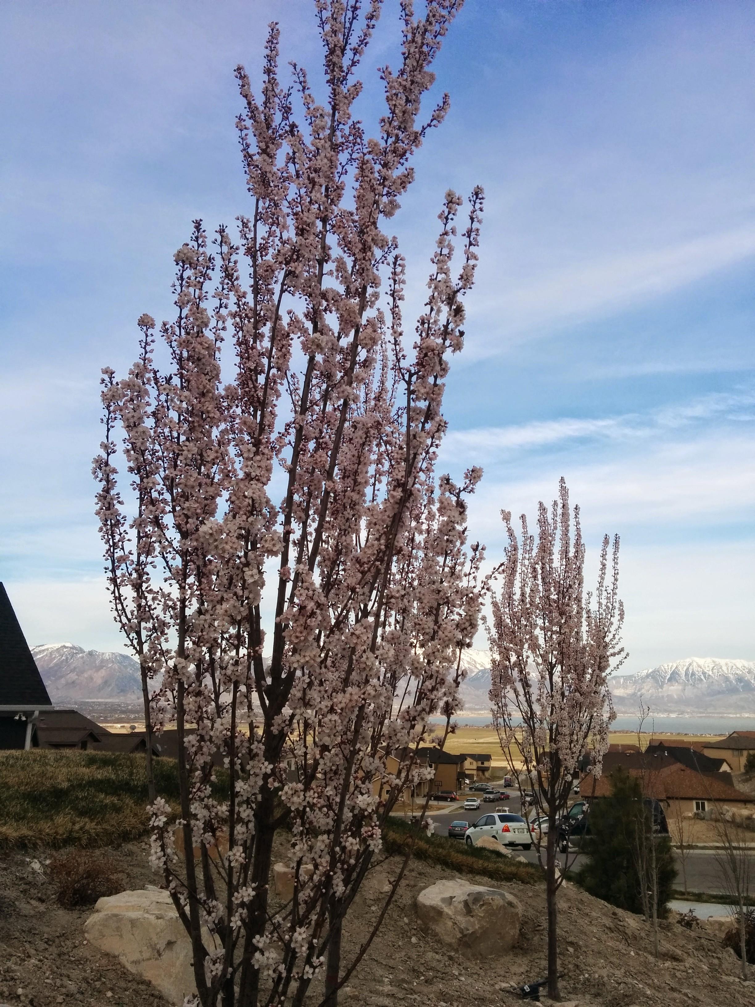 Leah Plants Amp Trees In Eagle Mountain Ut
